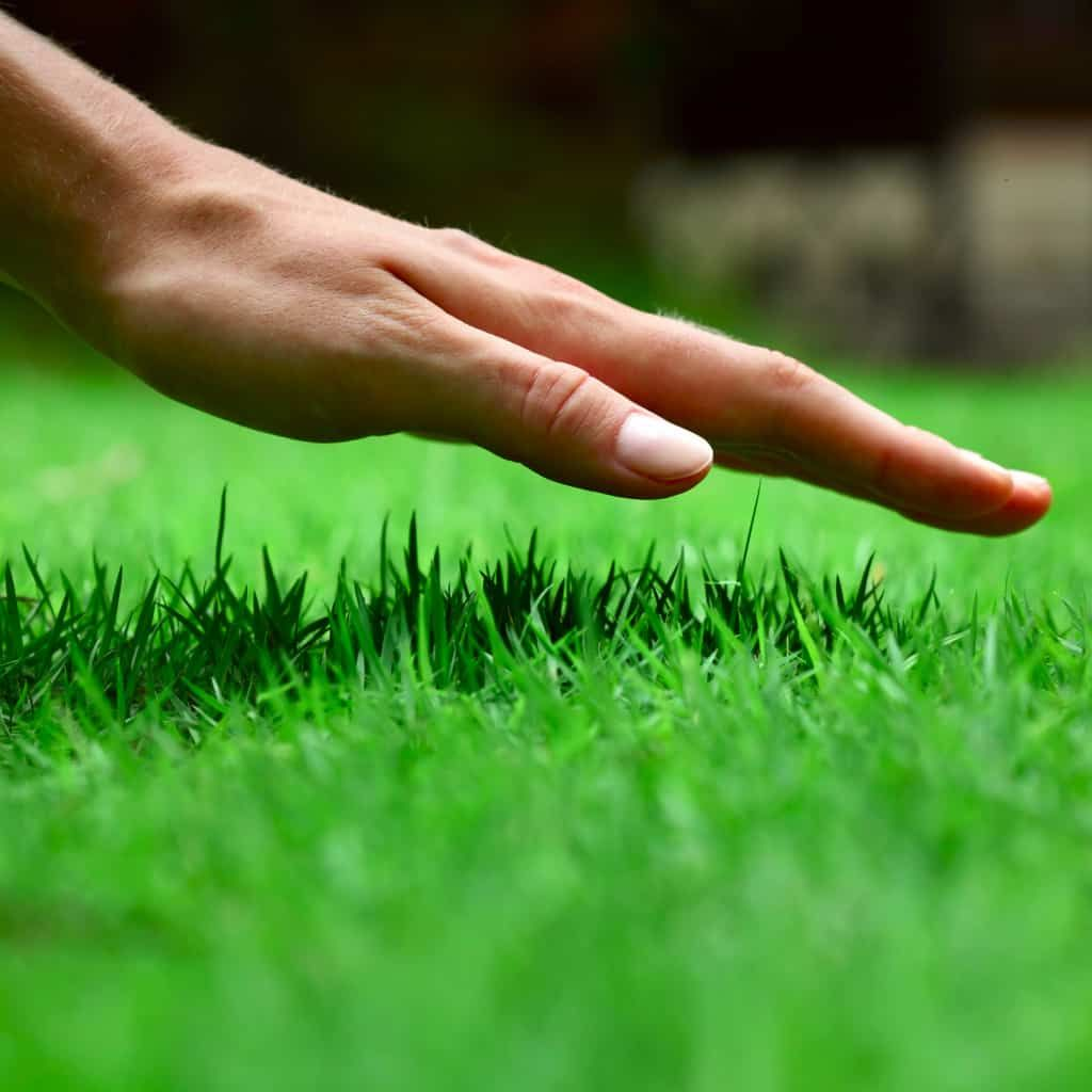 Spring Lawn Care Guidelines Lawn care