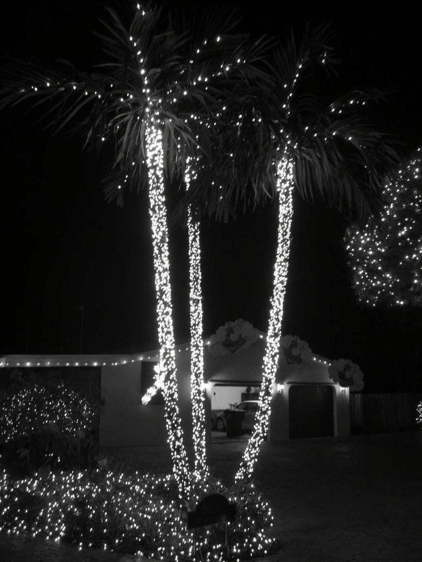 lit tree trunk tree trunkschristmas lightstreesholiday