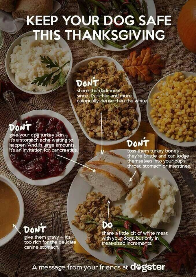 Do You Have Your Thanksgiving Stats Straight Dog Food Recipes Can Dogs Eat Dog Eating