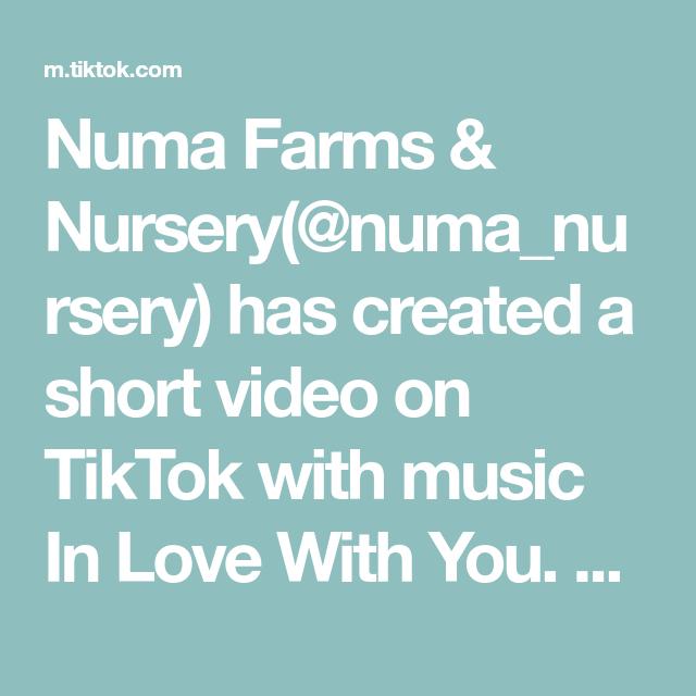 Numa Farms Nursery Numa Nursery Has Created A Short Video On Tiktok With Music In Love With You How To Make 1 Farm Nursery Music Backgrounds Moringa Tree