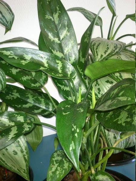 plante interieur debutant