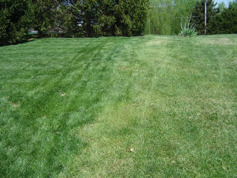 Avoid Traffic On Your Lawn If Possible When The Ground Is Wet Or Frozen In Winter Here Are Some Tips To Improve Your Lawn Lawn Turf Moss Lawn Lawn Fertilizer