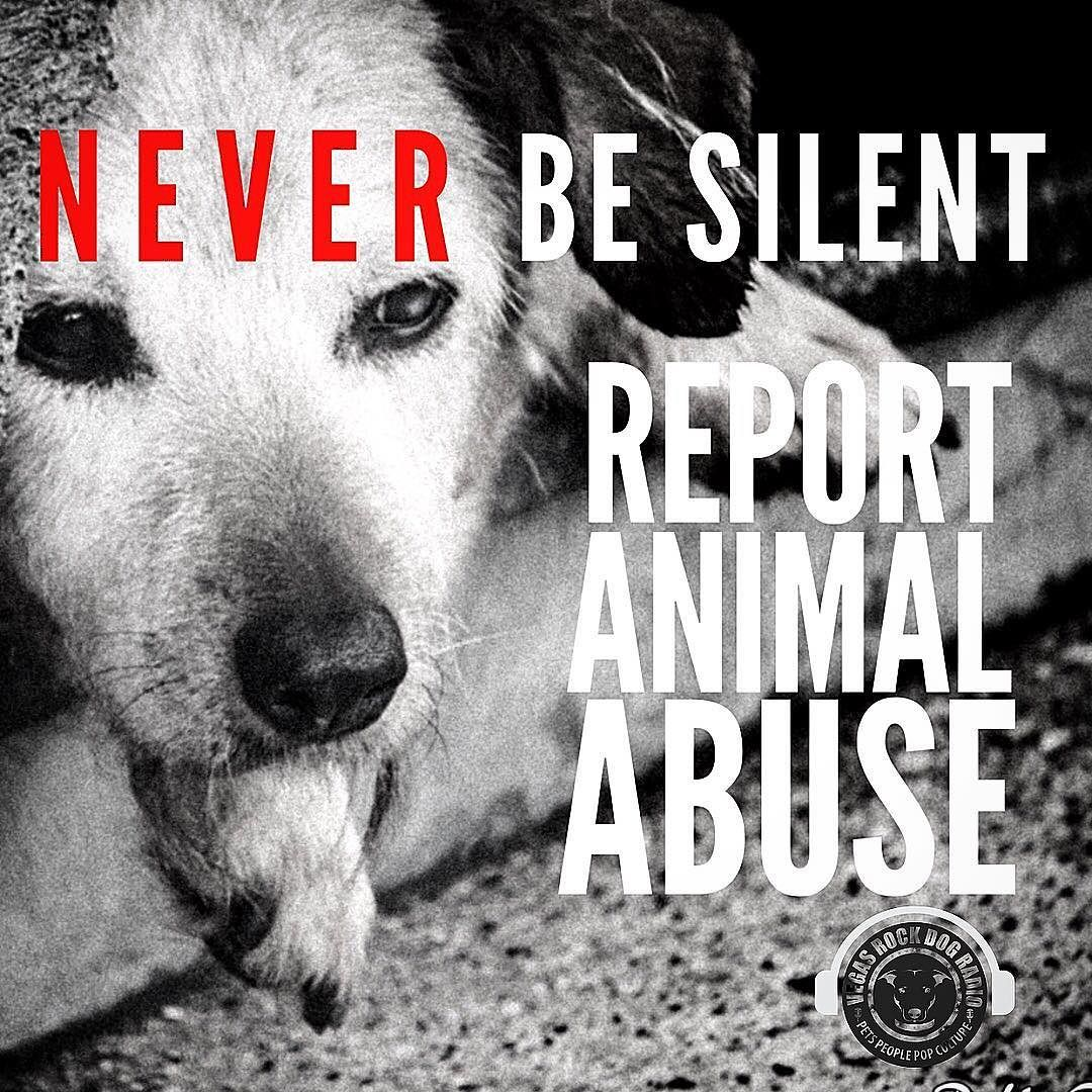 Never Be Silent Use Your Voice For Abused Animals Animalabuse Useyourvoice Animal Abuse Animals Dogs