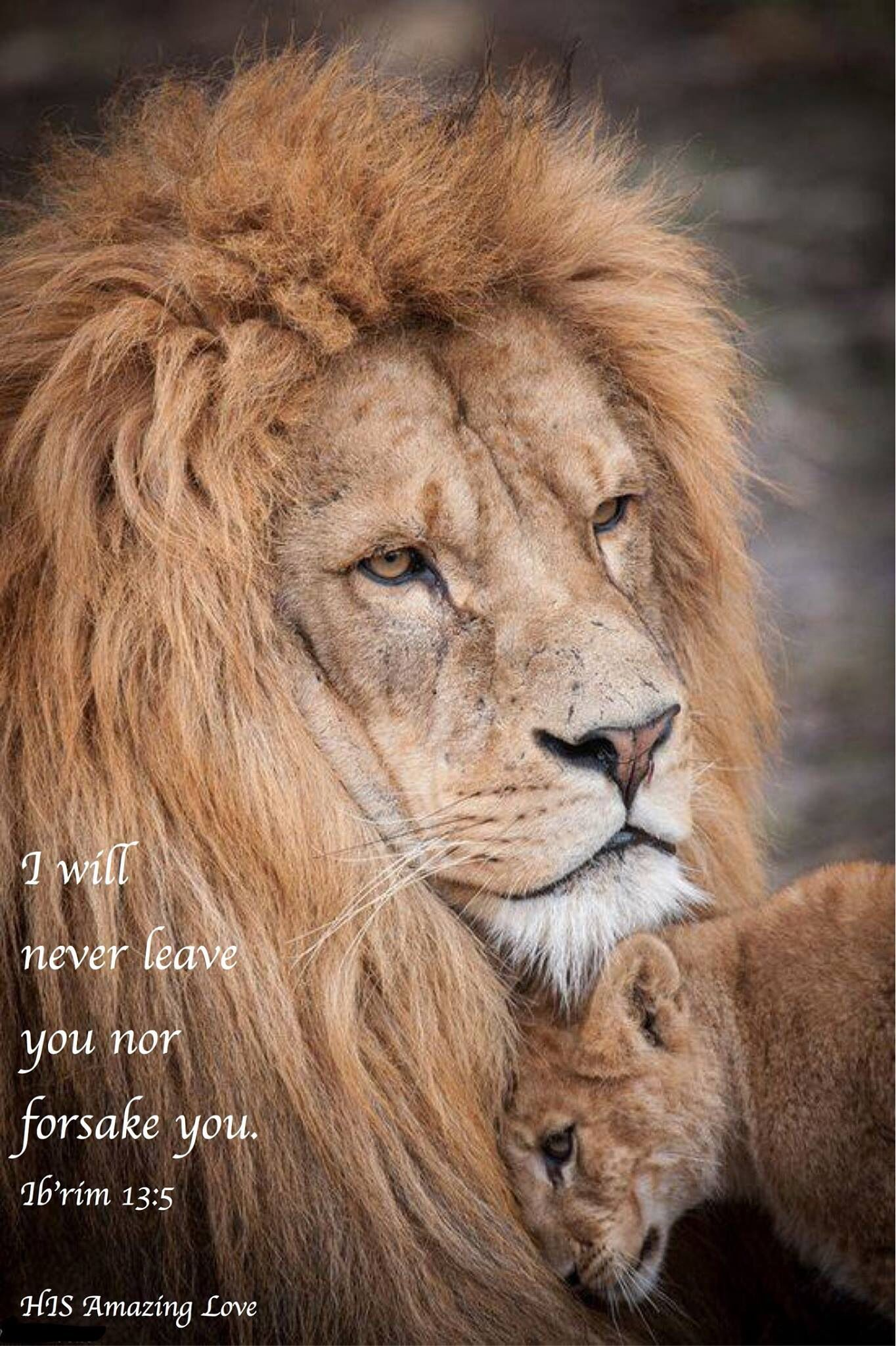 You Keep Lion Around Dad It Is Father S Day Adorable Cub