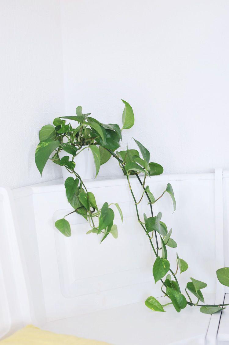 die besten zimmerpflanzen f r die wohnung zimmerpflanzen deko und pflege. Black Bedroom Furniture Sets. Home Design Ideas