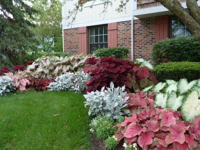 schattenpflanzen in prachtvollen farben f r einen magischen garten pflanzen schattenpflanzen. Black Bedroom Furniture Sets. Home Design Ideas
