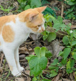 Don't let the neighbor's cat use your garden as a litterbox. These tips and tricks for keeping cats out of your garden will send them to do their business somewhere else.