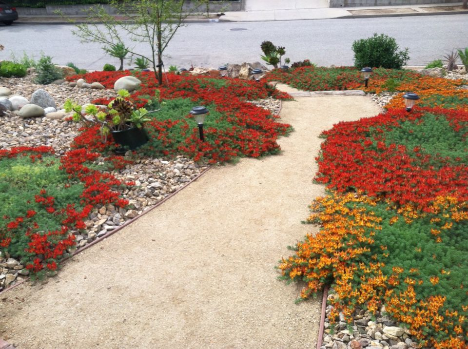 Drought tolerant landscaping no more grass decomposed for Local landscape designers