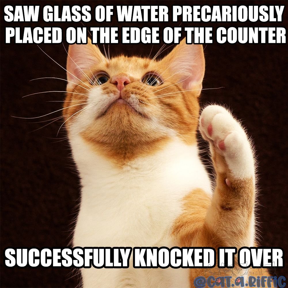 Saw Glass Of Water Precariously Placed On The Edge Of Counter Successfully Knocked It Over Funny Cat Memes Cats Silly Cats