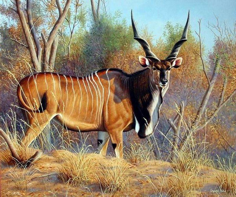 Eland2 Animals Wild Animals Pictures Animals Wild