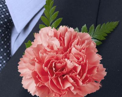 Pink Carnation Boutonniere Sku Bou Ca Pi 1 99 Principal Sponsors Carnation Flower Flower Packaging Wholesale Flowers