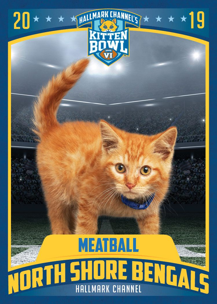 The North Shore Bengals Have Another Shot At Winning Kitten Bowl Vi With Their Star Cornercat Meatball Catch All The Action On Fe Kitten Bowls Kitten Kittens