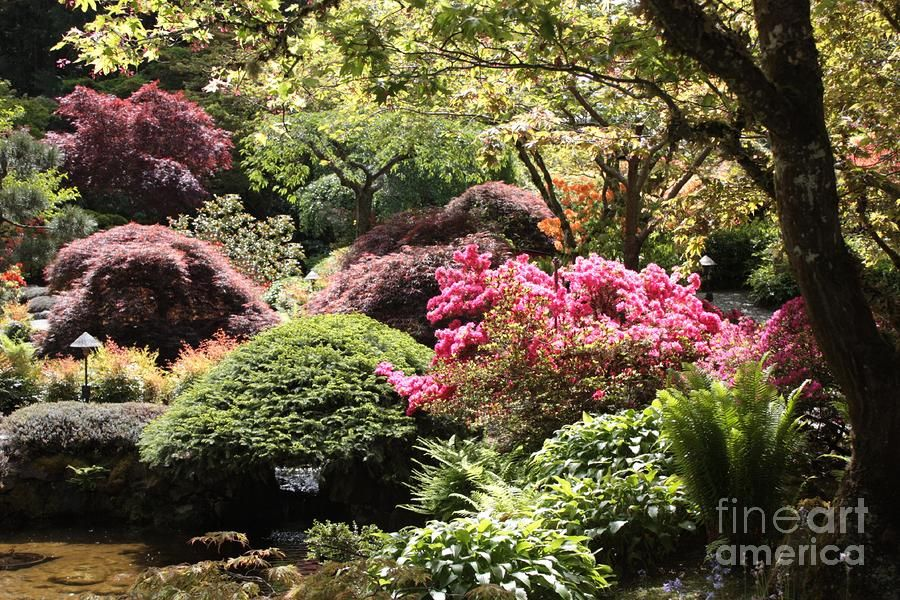 Sunny Japanese Garden By Carol Groenen With Images Japanese