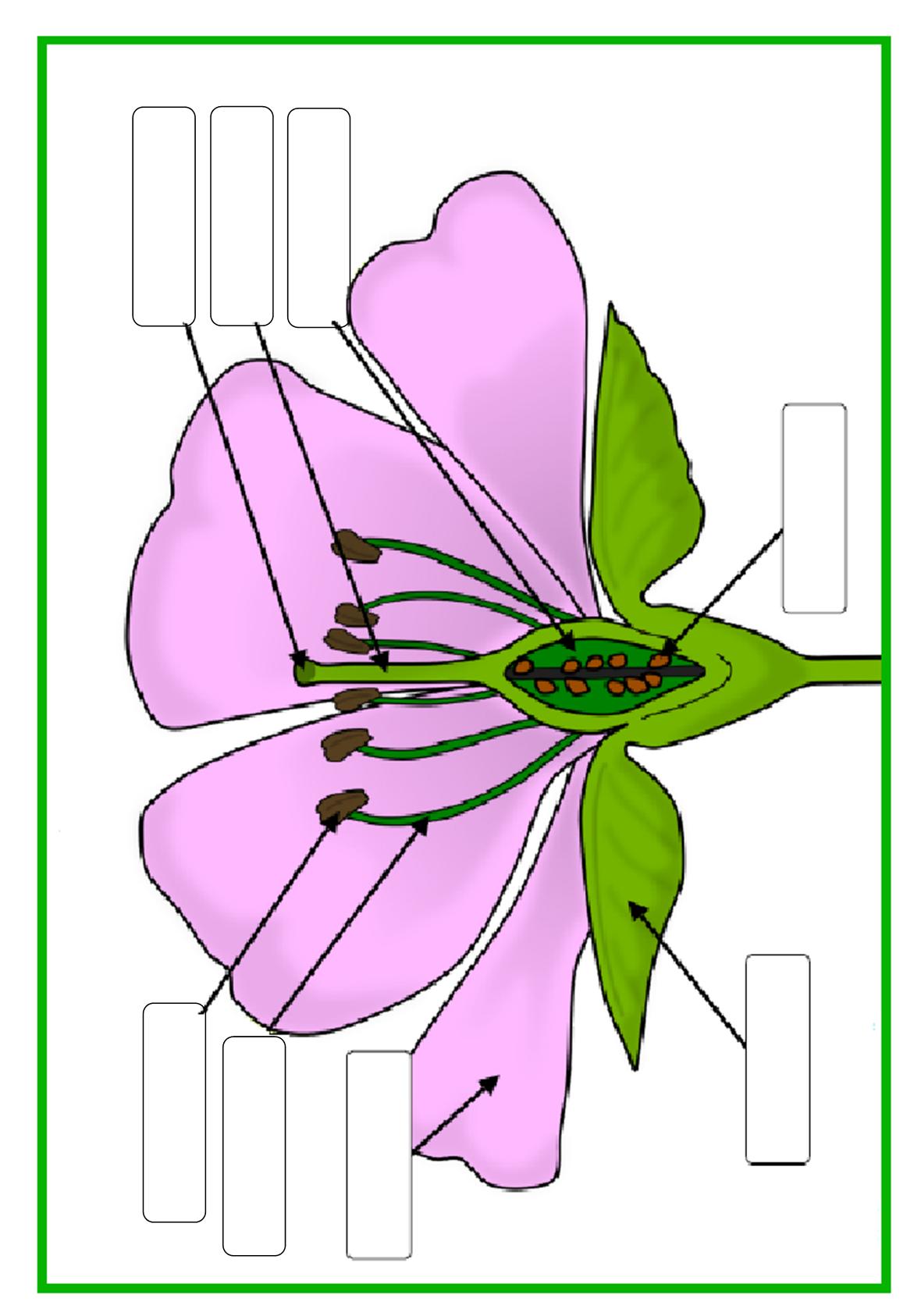 delen van een bloem invulblad planten Pinterest Life