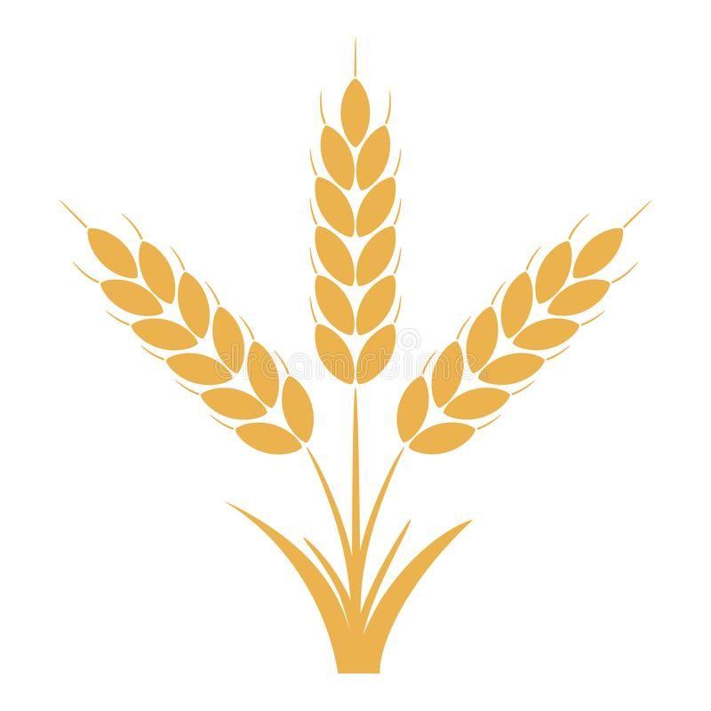 Wheat Or Rye Ears With Grains Bunch Of Three Yellow Barley Stalks Vector Vector Illustration Wheat Vector Wheat Design Farm Logo