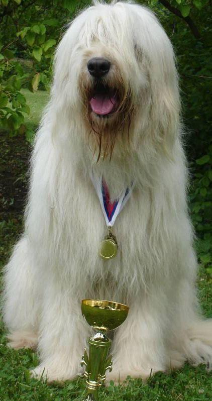 rare dog names - 422×798