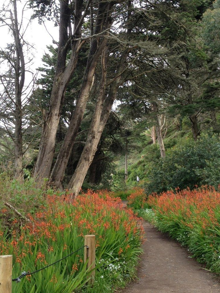 Lands End Trail Is A 3 Mile Loop Located Near San Francisco That Features Cave And Rated As Moderate