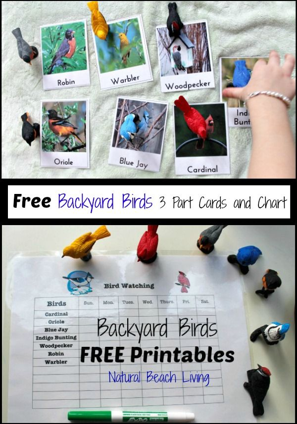 Observing & Learning Backyard Birds with Free Printables ...