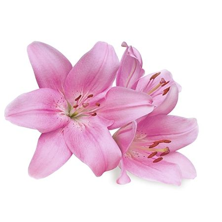 Symbolic meanings of flowers that youve been wanting to know my pink lily flower meaning mightylinksfo