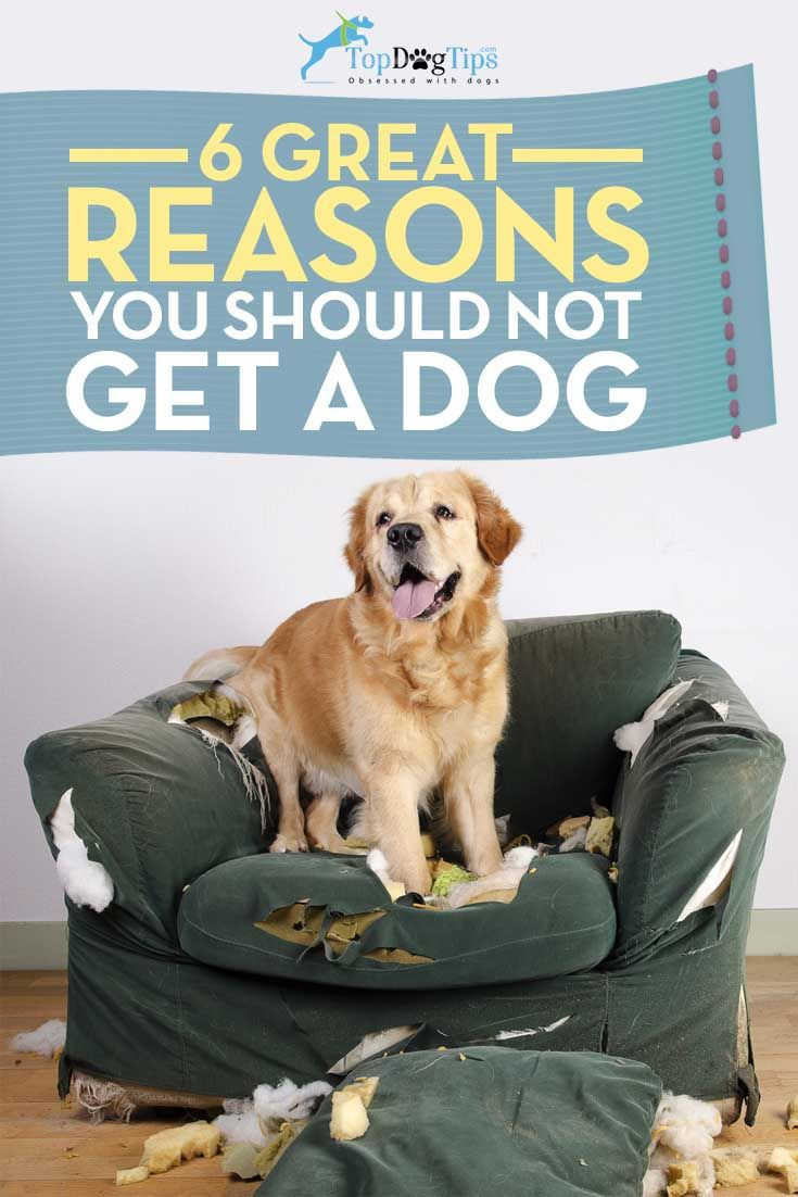 6 Good Reasons Not To Get A Dog Top Dog Tips Dogs Dog Top Animals For Kids