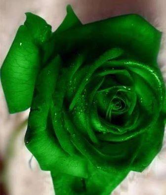 Rare Green Rose Beautiful Flowers Amazing Bouquets Stunning Roses Green Rose Beautiful Rose Flowers Beautiful Roses