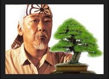 Kids In Care Are Like Bonsai Trees And You Are Their Mr Miyagi Bonsai Tree Care Bonsai Seeds Bonsai Tree
