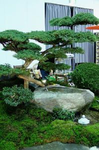 der kleine japangarten garten ideen garten garten ideen und gartenbonsai. Black Bedroom Furniture Sets. Home Design Ideas
