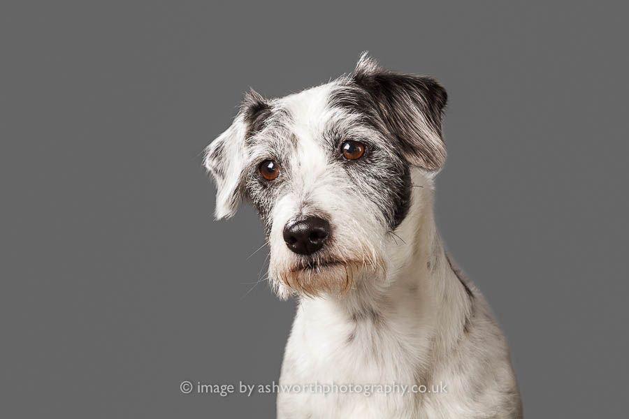 Dog Photography Cambridge Fauna Mira Dogs Dog Photography