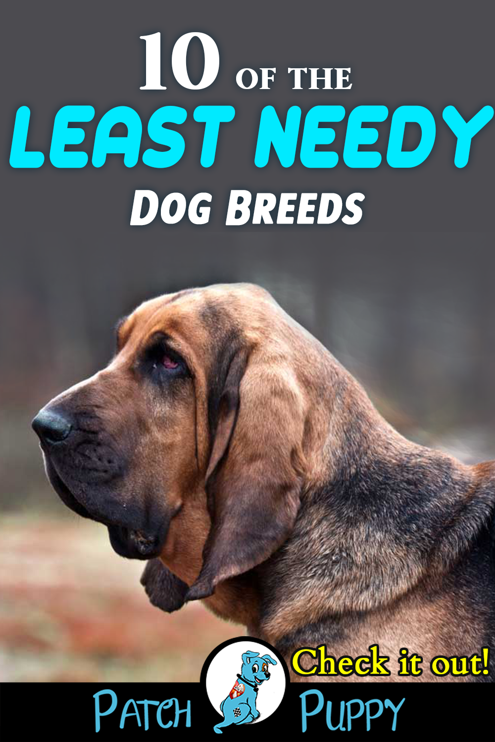 10 Of The Least Needy Dog Breeds You Ll Be Surprised Patchpuppy Com Dog Breeds Dogs Apartment Dogs