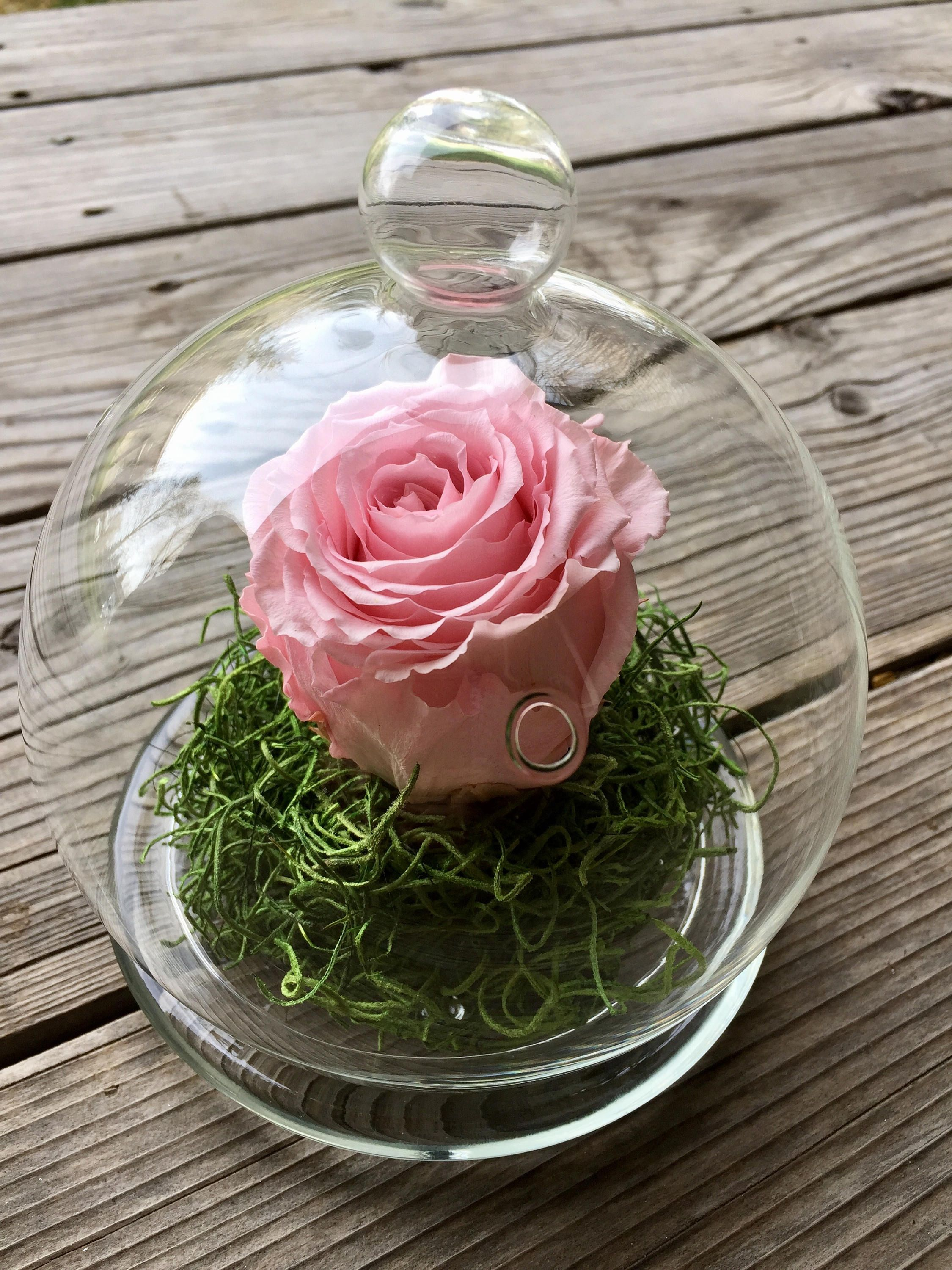 Preserved Rose In A Glass Cloche By Tetonboutique On Etsy How To Preserve Flowers Preserved Roses Arrangement Flower Box Gift