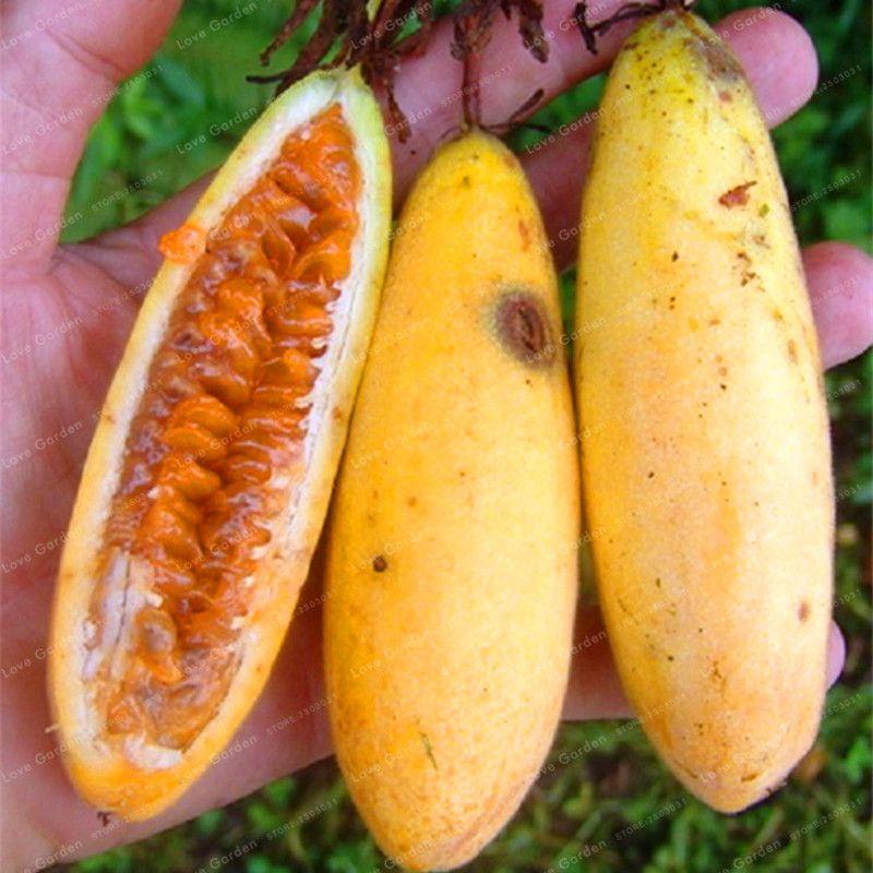 Passiflora Banana Passion Fruit Seeds Pink Flower Tropical Garden Passiflora Family Garden Indoor Bonsai Flower Seed 50pcs
