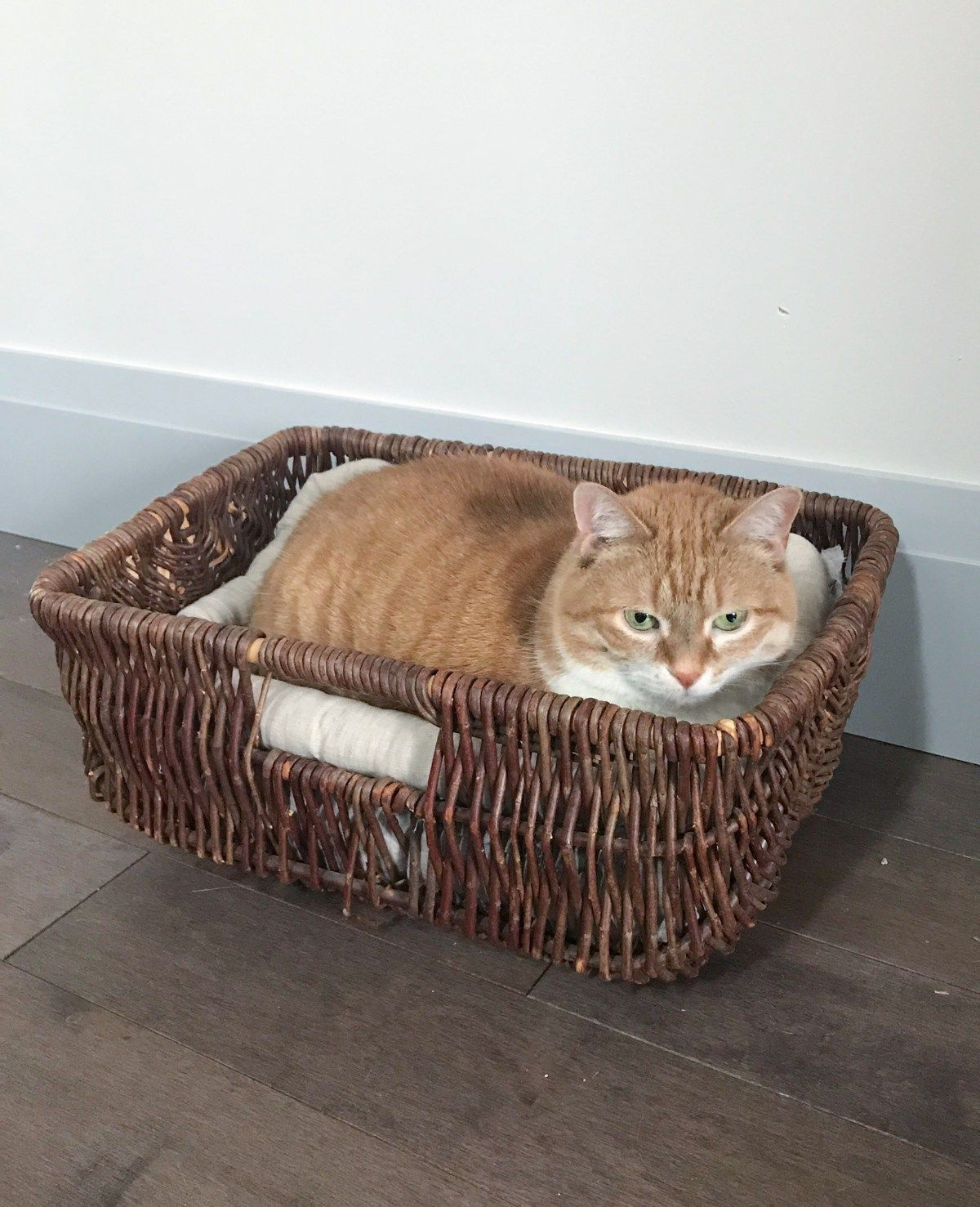 DIY Basket Cat Bed: Thrift Store Upcycle Challenge #thriftstoreupcycle