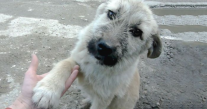 Stray Puppy Shakes Rescuer S Hand After He Saves His Life More
