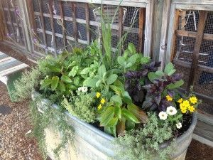 Superbe For Summer   Lots Of Herbs And Some Flowers Too.trough Planters   Oak  Street Garden Shop   Birmingham, Al