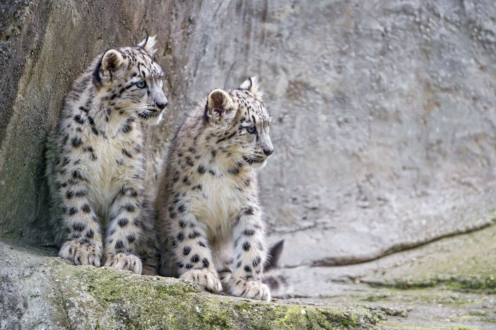 Two cubs on the side