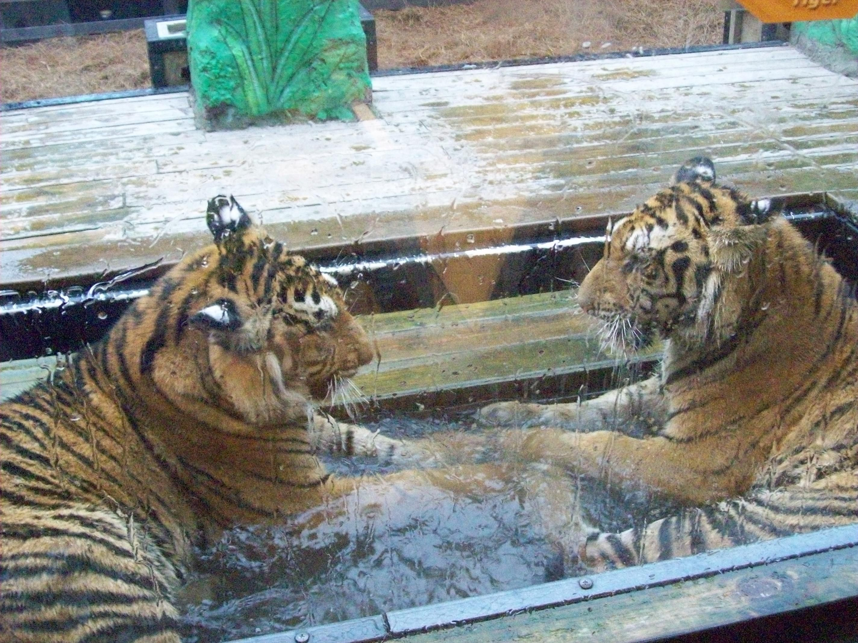 Tigers Preservation Station Myrtle Beach