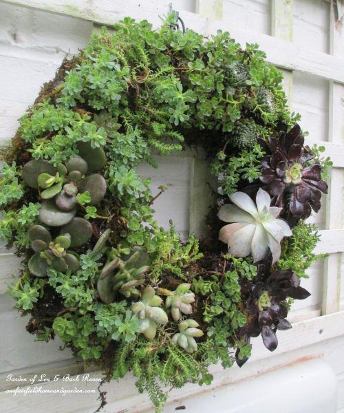 Succulent Wreath - DIY project - http://thegardeningcook.com/succulent-wreath-diy-project/