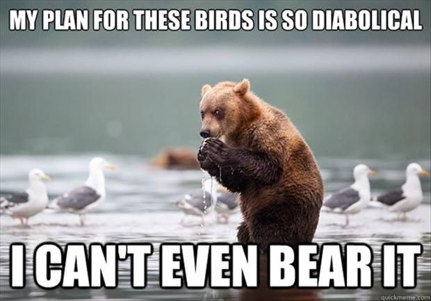Funny Animal Pictures 55 Pics Funny Animal Pictures Funny Bears Bear Meme