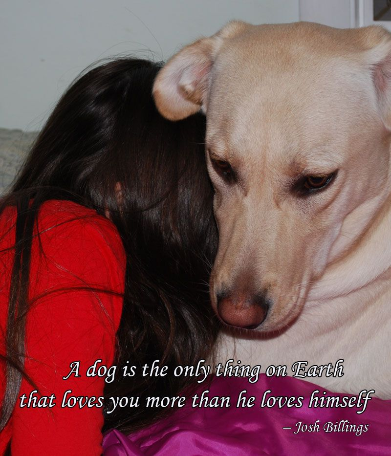 Are These Dog Quotes About Me And My Dog Best Dog Quotes Dog Quotes Dog Lover Quotes