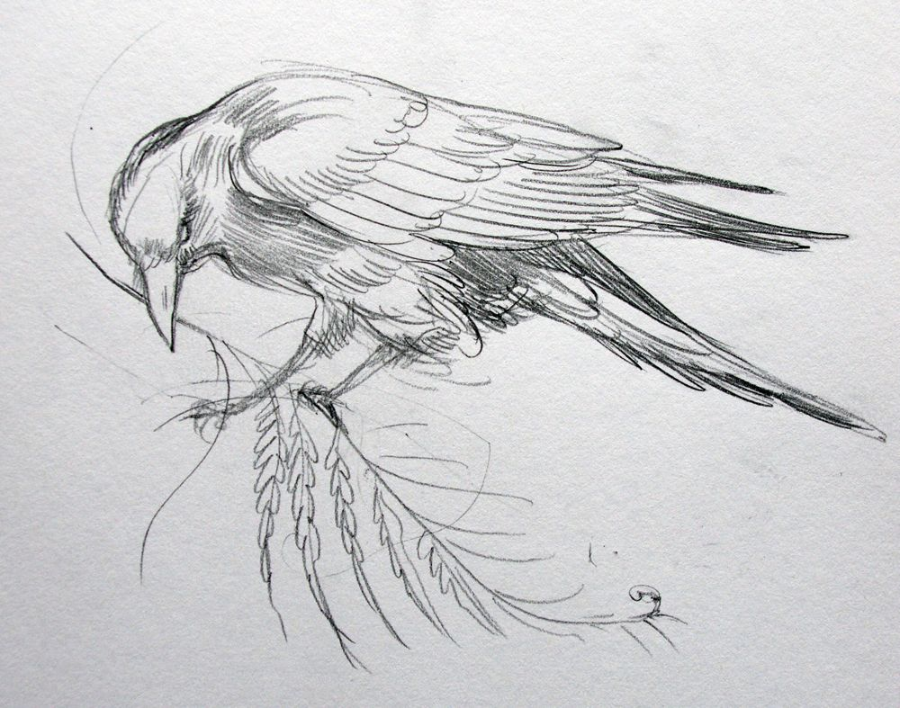 25 Cool Things To Draw That Are Easy And Fun For Beginners Crows