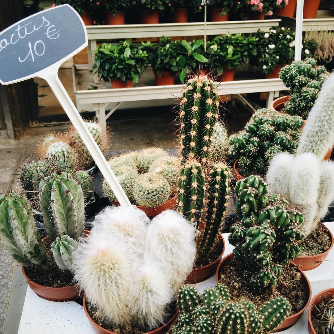 So Many Different Kinds Of Cacti Photo By Sincerelyjules