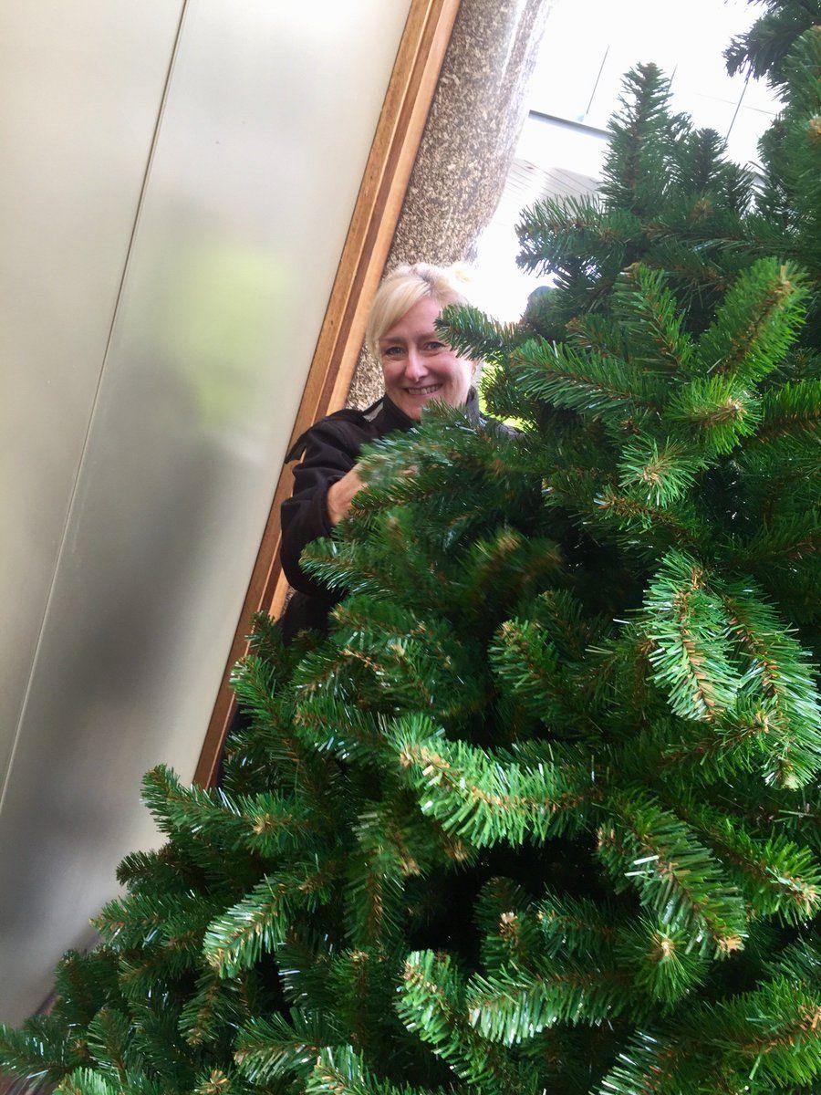 Pin on plantswork Members Christmas Experts