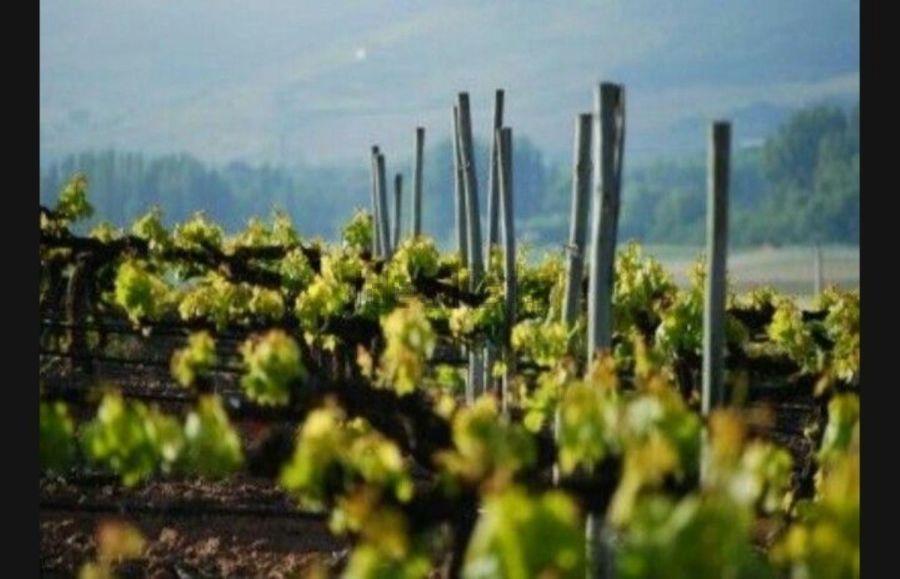 Bargain Friday Bare Bones But Breathtaking Right In The Heart Of El Ribera Del Duero Prime Spanish Wine Count Spanish Wine Country Wine Country Spanish Wine