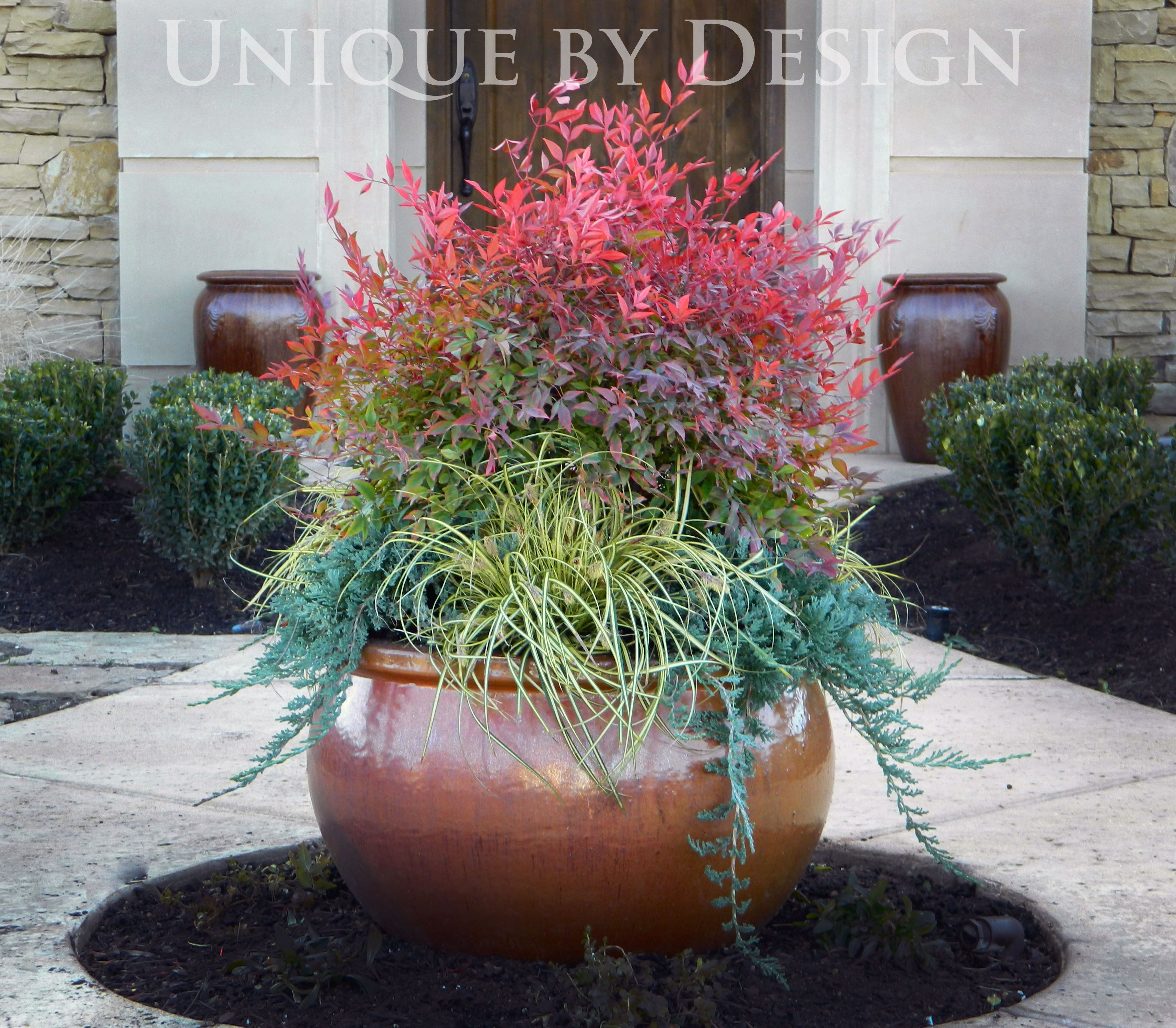 'Heavenly Bamboo' Nandina, Japanese Sedge Grass and 'Blue Rug' Juniper.