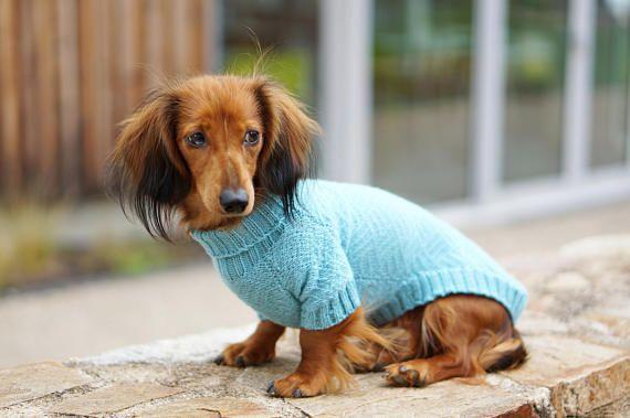 Dachshund clothes Dachshund sweater Dog clothes Dog | Etsy | Dachshund  sweater, Dog sweater, Dachshund