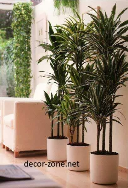 Indoor Plants Arrangement And Placement