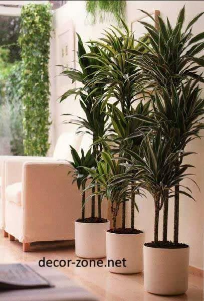 indoor plants arrangement and placement | Arreglo Florale - masetera ...