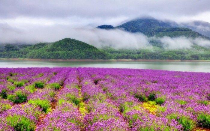 le plus beau paysage fleuri voyez les meilleures images de la nature belles photos. Black Bedroom Furniture Sets. Home Design Ideas