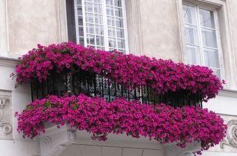 Kwiaty Na Balkon Balcony Flowers Small Balcony Garden Balcony Plants