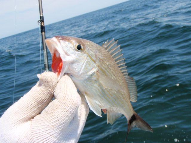 Red Ruby Lips Fish Fish Deep Sea Fishing Sea Fishing